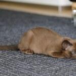 Tiererbrochenes aus dem Teppich entfernen