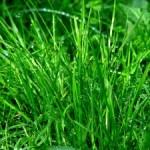 Grasflecken aus dem Teppich entfernen