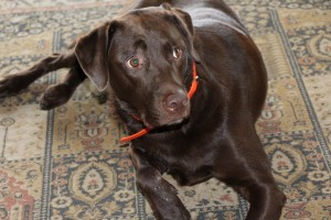 dog-731979_1280