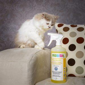 Katzenurin aus Teppich entfernen